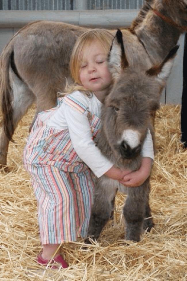 miniature-donkey5