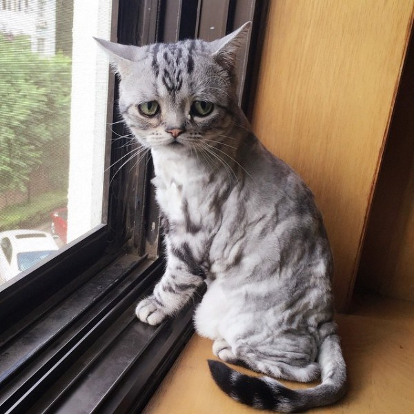 saddest cat luhu