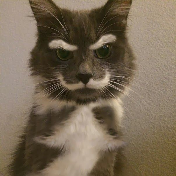 cat-fur-markings-1