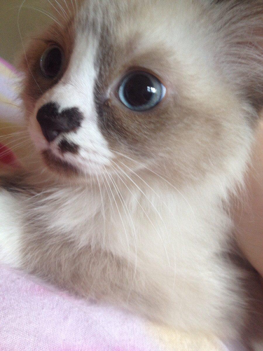 cat-fur-markings-10