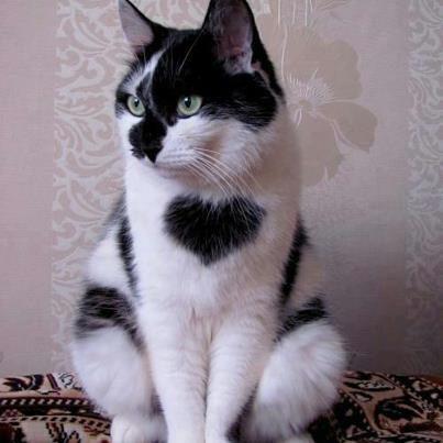cat-fur-markings-12