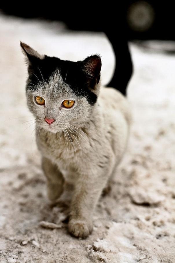 cat-fur-markings-13