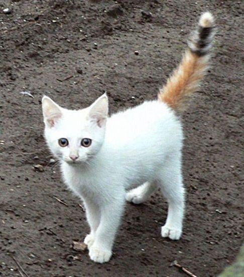cat-fur-markings-14