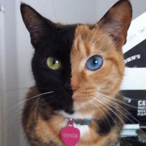 cat-fur-markings-16