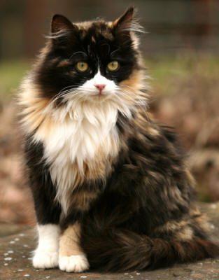 cat-fur-markings-17