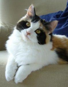 cat-fur-markings-18