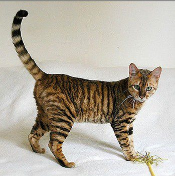 cat-fur-markings-19