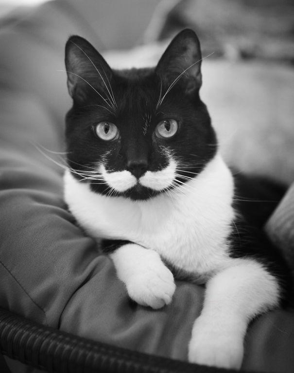 cat-fur-markings-2