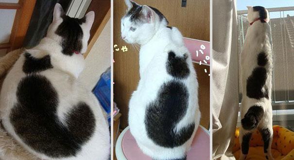 cat-fur-markings-21