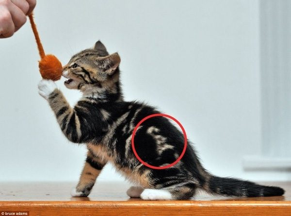 cat-fur-markings-23