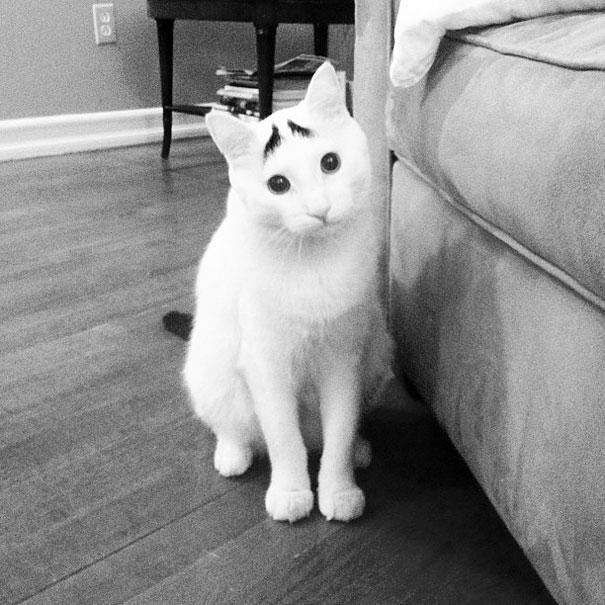 cat-fur-markings-5