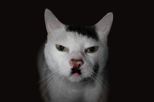 cat-fur-markings-6