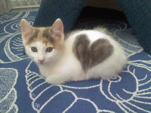cat-fur-markings-8