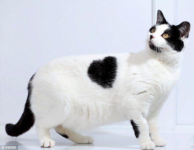 cat-fur-markings-9