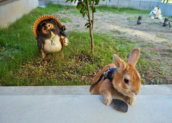 short-bunny-koron-japan4