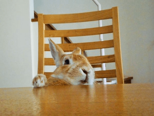 short-bunny-koron-japan5