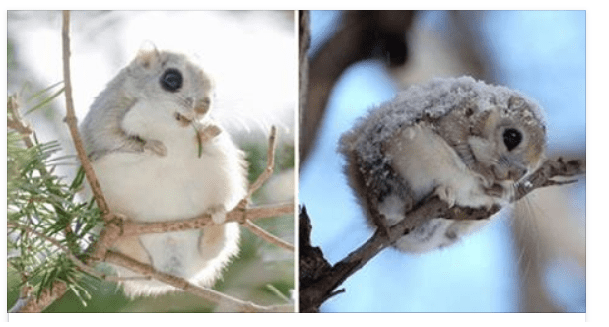 These Might Possibly Be The Most Adorable Creatures You