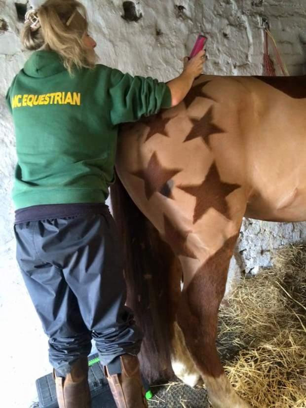 horse hairdo 7
