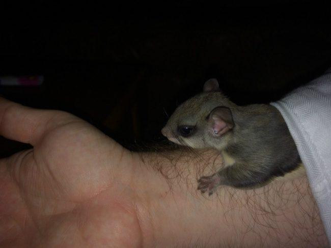 guy saves newborn squirrel 11