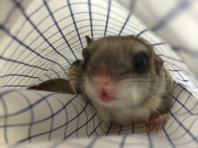 guy saves newborn squirrel 13