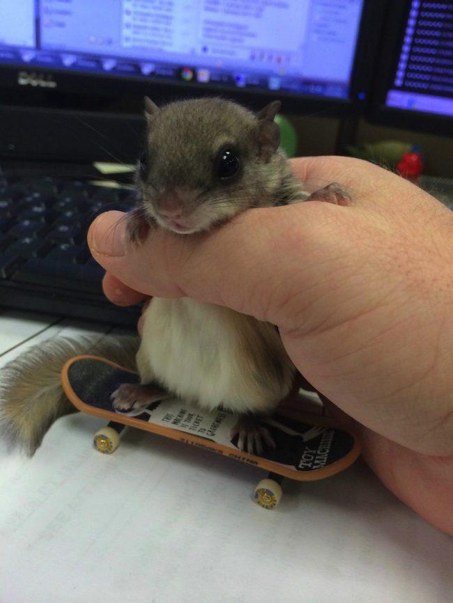 guy saves newborn squirrel 14