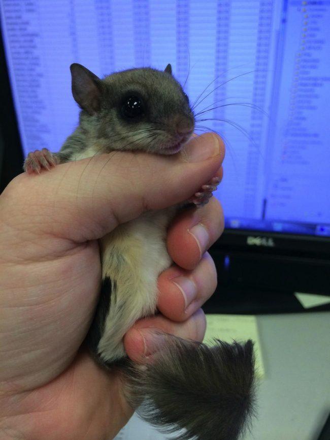 guy saves newborn squirrel 15