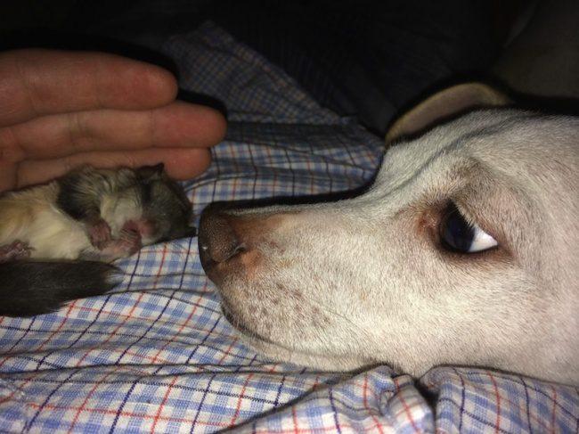 guy saves newborn squirrel 7