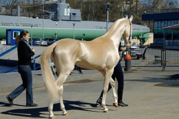 horse breeds 1a