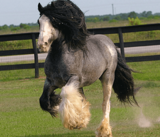 horse breeds 2