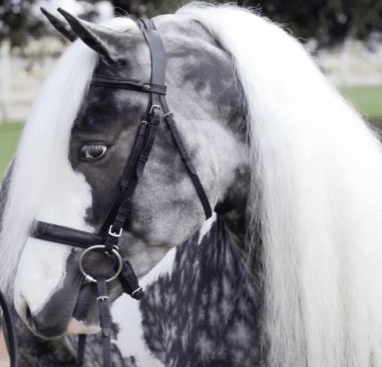 horse breeds 3