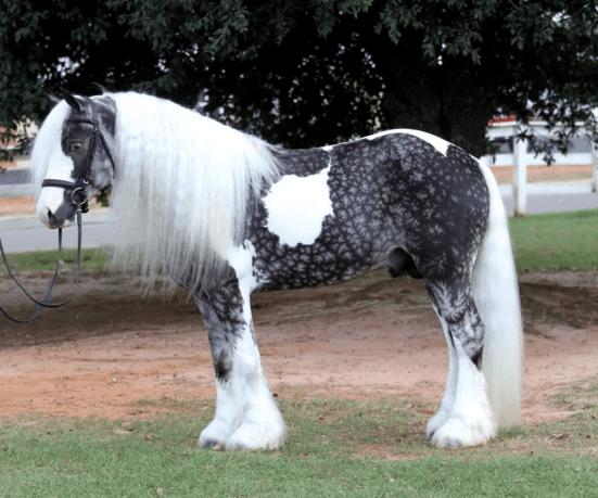 horse breeds 3a