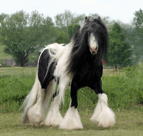 horse breeds 4
