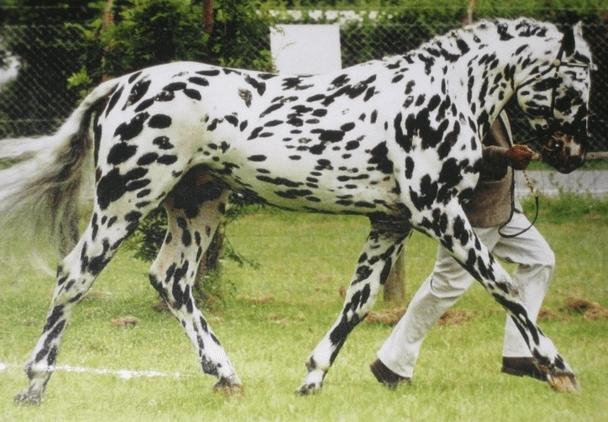 horse breeds 7a