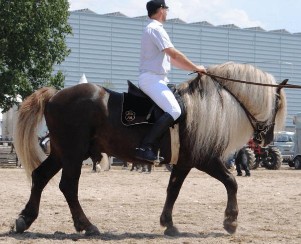 horse breeds 8a
