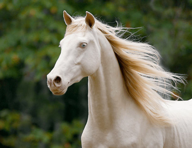 horse breeds 9a
