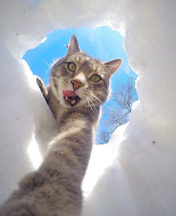 selfie cat 6
