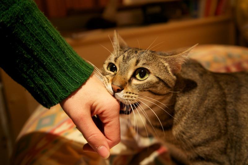 cats behaviour 7