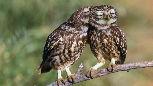 greatest owl pictures