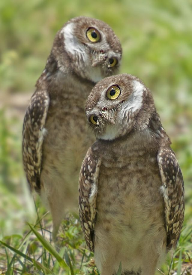 greatest owl pictures 85
