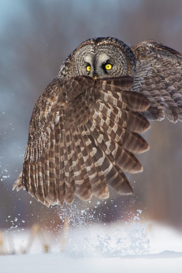 greatest owl pictures 87
