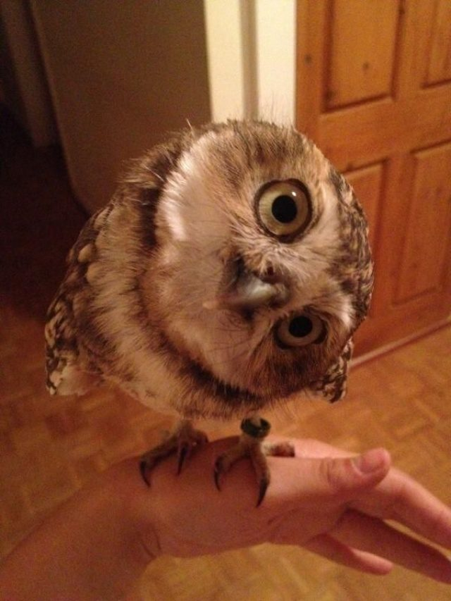 greatest owl pictures 91