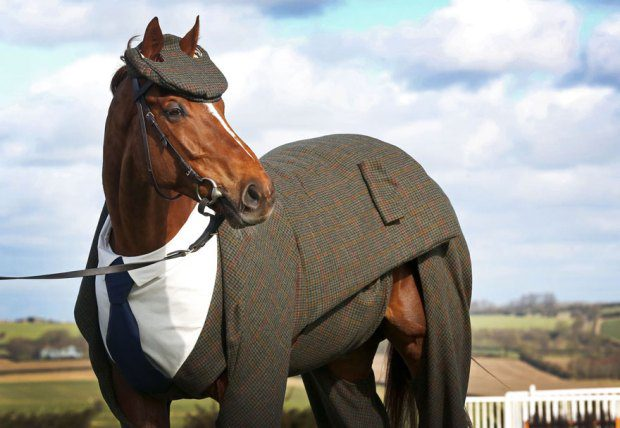 now watch him neigh neigh 2
