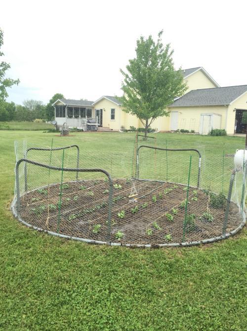 Garden Chicken Wire Fence