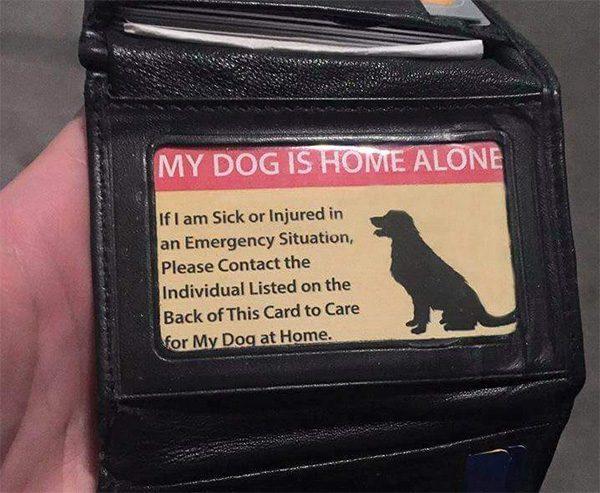 pet care card 2