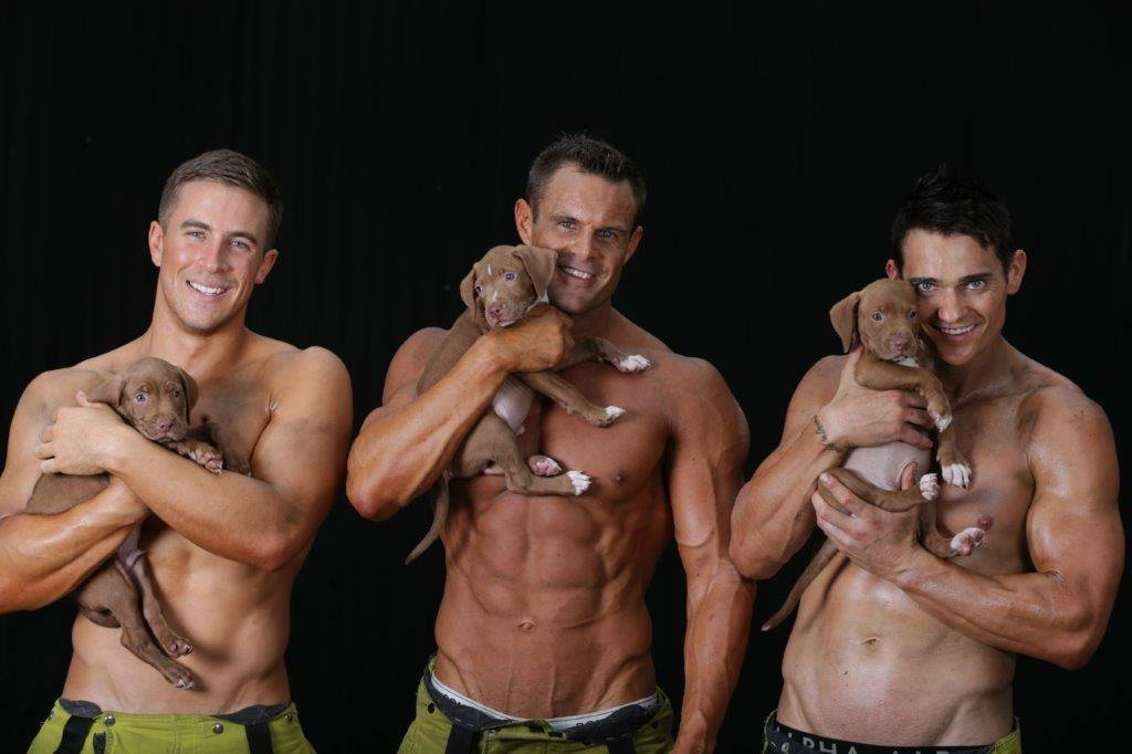 firefighters and rescue pups 12