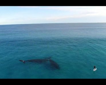 paddleboarder hangs out with whales